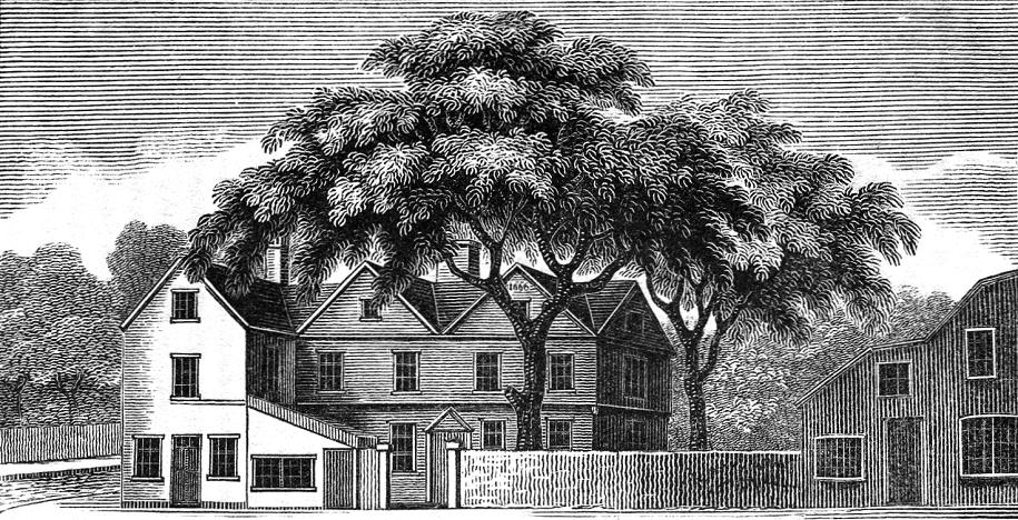 Libertytree2