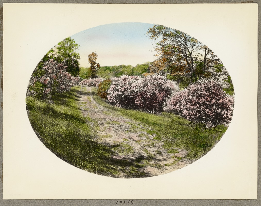 Br51 arboretum