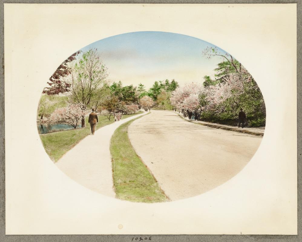 Br52 arboretum path